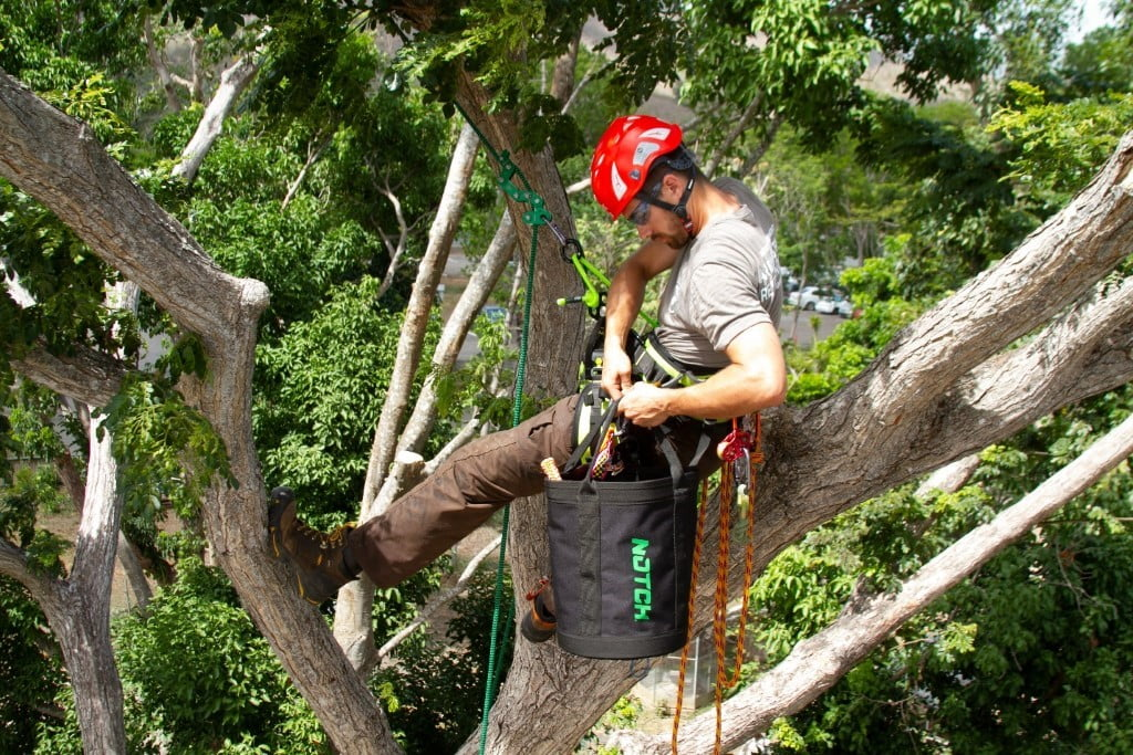 File:Tree Climbing Arborist.jpg - Wikimedia Commons
